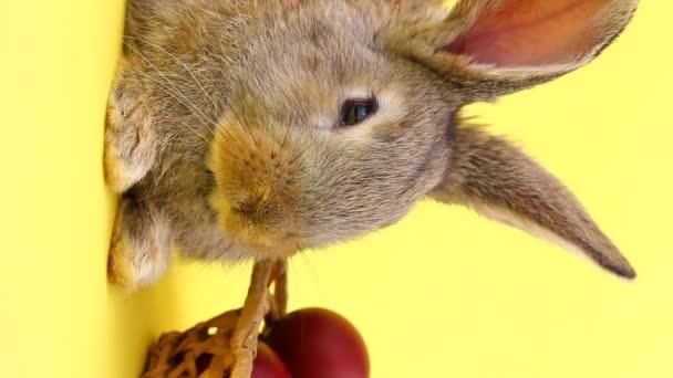 malý nadýchaný hnědý láskyplný domácí zajíček sedí na pastelově žlutém pozadí s proutěným dřevěným košem plným barevných velikonočních vajec