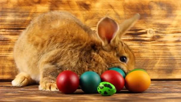 egy kis bolyhos barna húsvéti nyuszi festett színes húsvéti tojás ül a barna háttér.