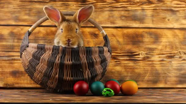 kis barna bolyhos aranyos nyúl ül egy fonott kosárban sokszínű válogatott húsvéti tojás