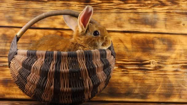 egy kis aranyos barna nyúl ül egy mély fonott kosárban egy fa háttér és néz ki csak a füle.