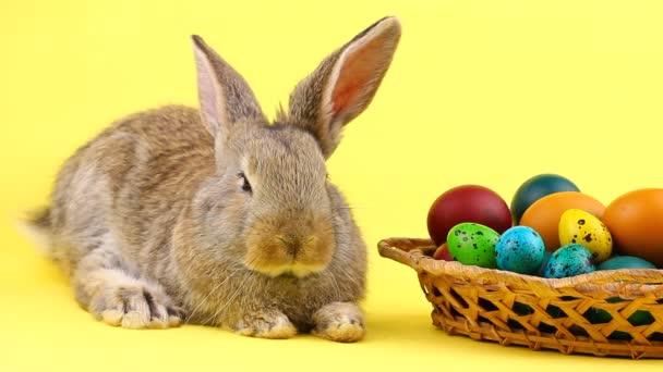 egy kis bolyhos barna húsvéti nyuszi fekszik egy fa fonott kosár mellett, a különböző színes tojások pasztell sárga háttér
