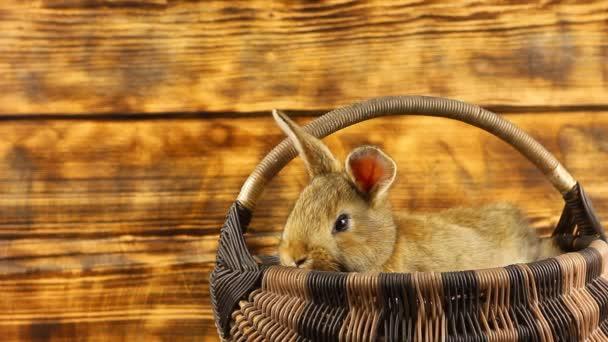 ein kleines hübsches, flauschiges braunes Kaninchen sitzt in einem Weidenkorb und schaut heraus, wackelt mit seinen Ohren auf einem versengten, geschmückten Hintergrund