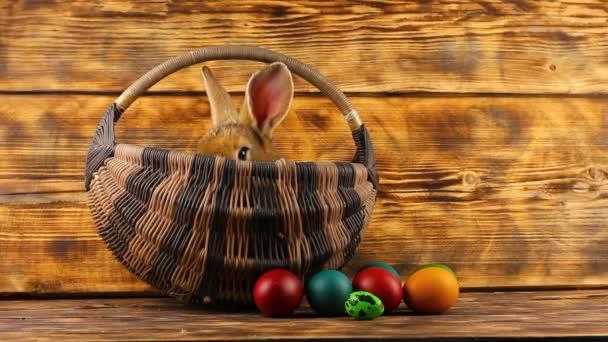 malý hnědý nadýchaný roztomilý králík sedí v proutěném koši s multi-barevné rozmanité velikonoční vajíčka na dřevěném pozadí.