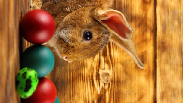 a small fluffy brown Easter bunny with painted colorful Easter eggs sits on a brown background.