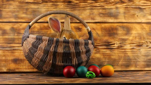 kleine braune flauschige niedliche Kaninchen sitzt in einem Weidenkorb mit bunt sortierten Ostereiern auf einem hölzernen Hintergrund.