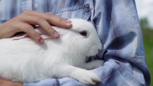 Junge kaukasische Ethnie in einem blau karierten Hemd hält niedliche flauschige häusliche weiße Kaninchen seine Arme streichelt es langsam im Freien in sonnigem weben .
