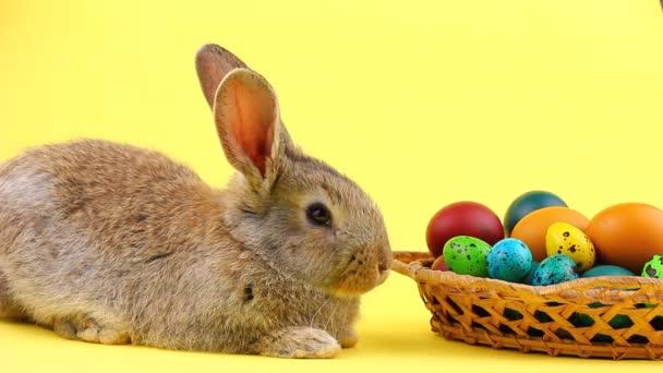 ein kleiner flauschiger brauner Osterhase liegt neben einem hölzernen Weidenkorb mit einer Vielzahl bunter Eier auf pastellgelbem Hintergrund