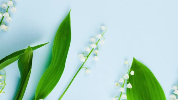 Spring small fragile forest white lilies of the valley with green leaves lie