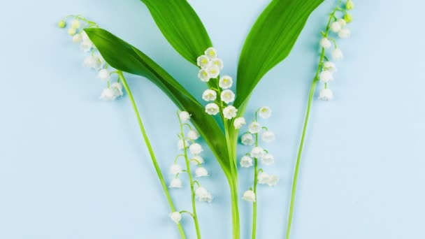 small white fragrant lily of the valley flower with green leaves lies