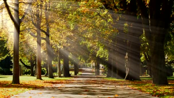 Image result for sun rays through trees in suburbia