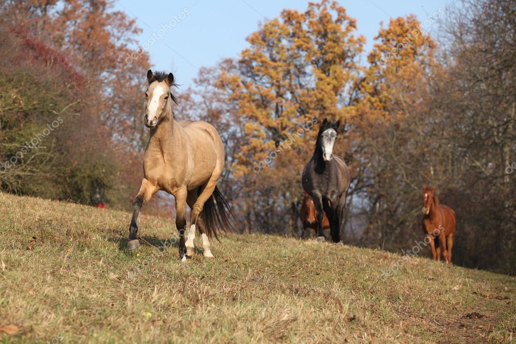 Dávka koní běží na podzim — Stock Fotografie © Zuzule  73553019 535ea30da7
