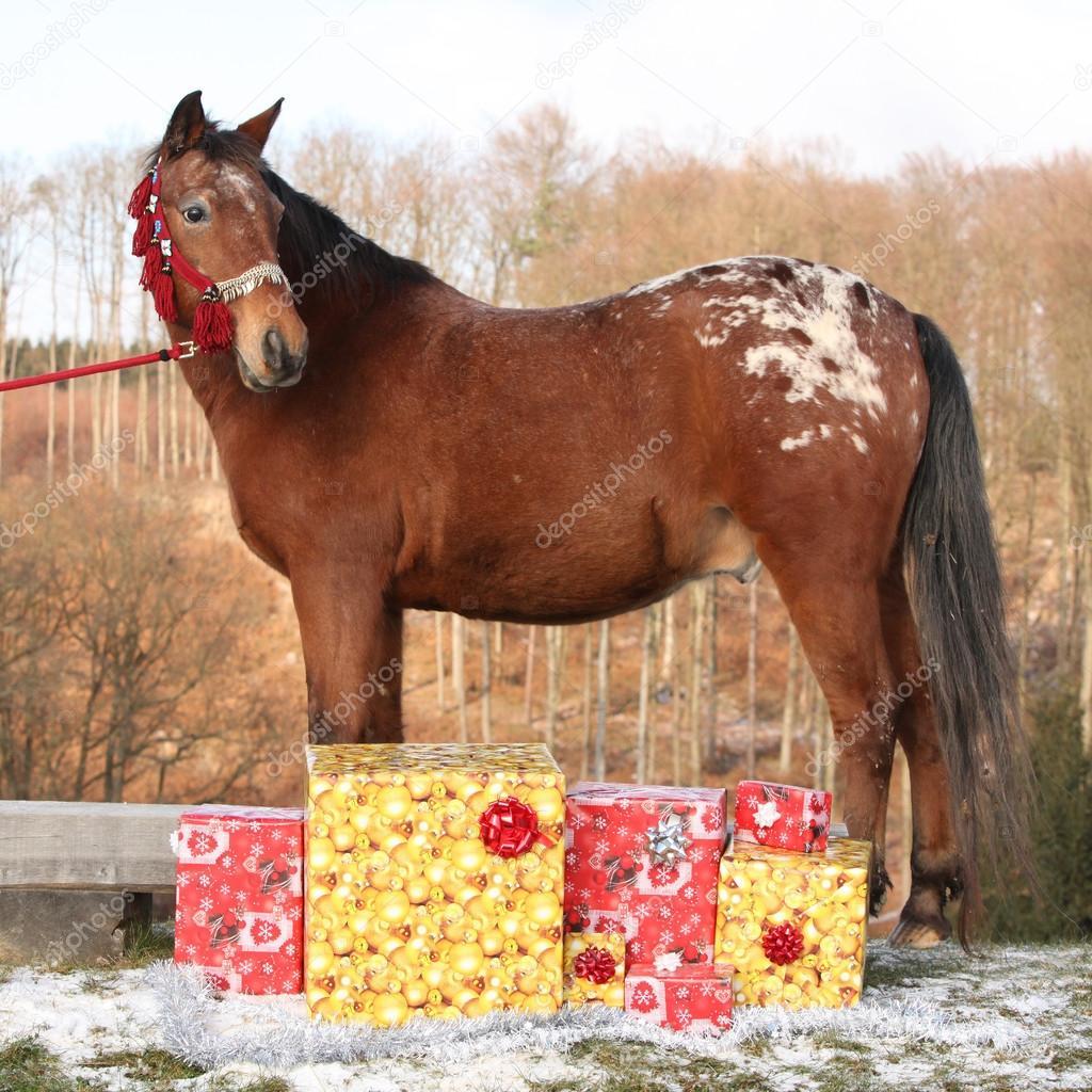 Schönes Pferd mit Weihnachtsgeschenke — Stockfoto © Zuzule #91914680