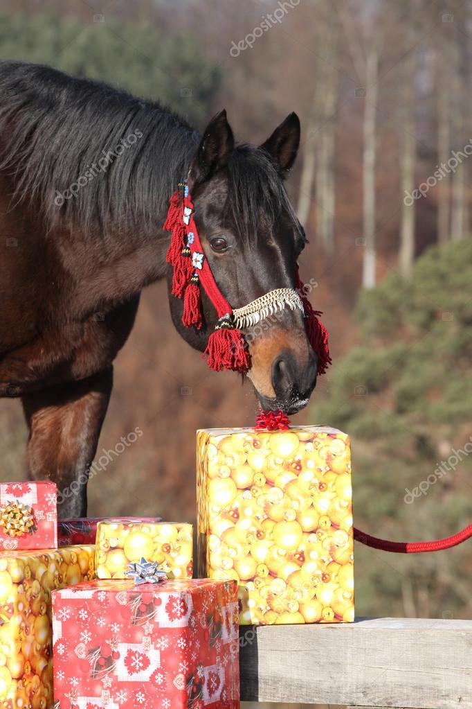Schönes Pferd mit Weihnachtsgeschenke — Stockfoto © Zuzule #94455718