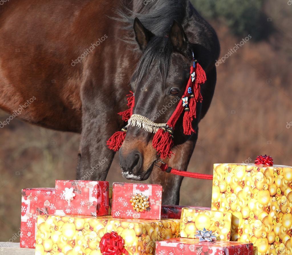Schönes Pferd mit Weihnachtsgeschenke — Stockfoto © Zuzule #99893492