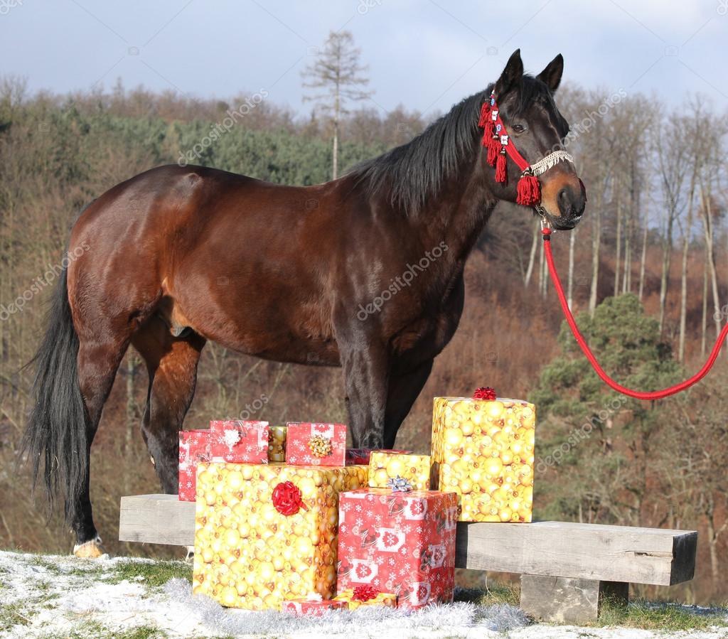 Schönes Pferd mit Weihnachtsgeschenke — Stockfoto © Zuzule #99893784