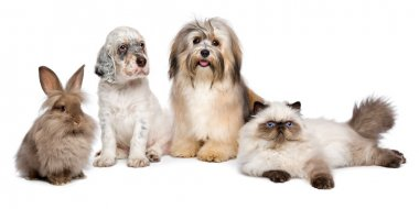 Group of young dogs, cat, rabbit in front of white