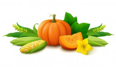 Still life with pumpkin and corn on white background. Fresh harvest for Thanksgiving day.