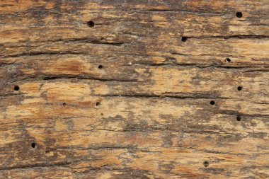 Old  wooden texture  with termite