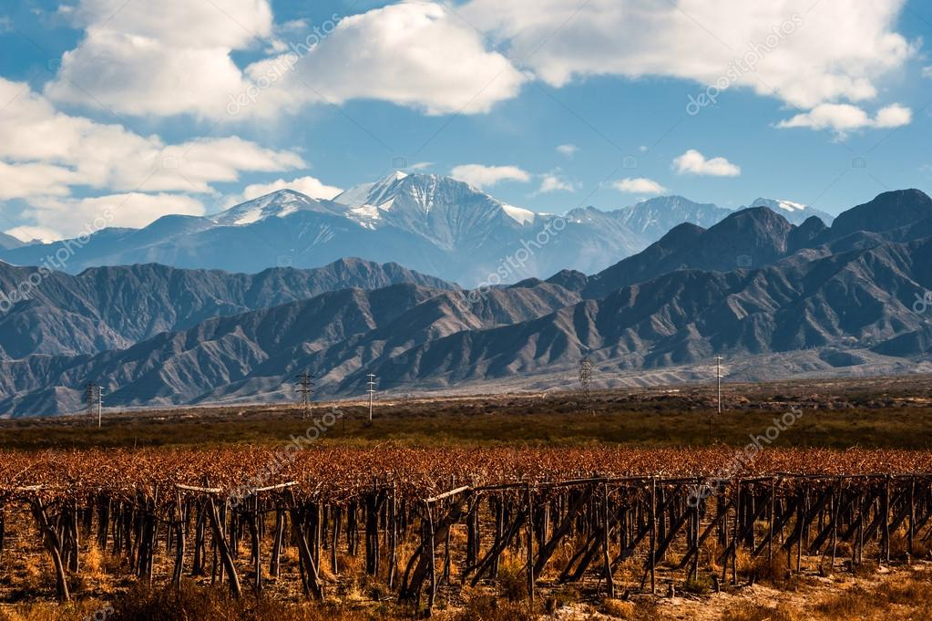 Volcano Aconcagua and Vineyard in the Argentine province of Mend