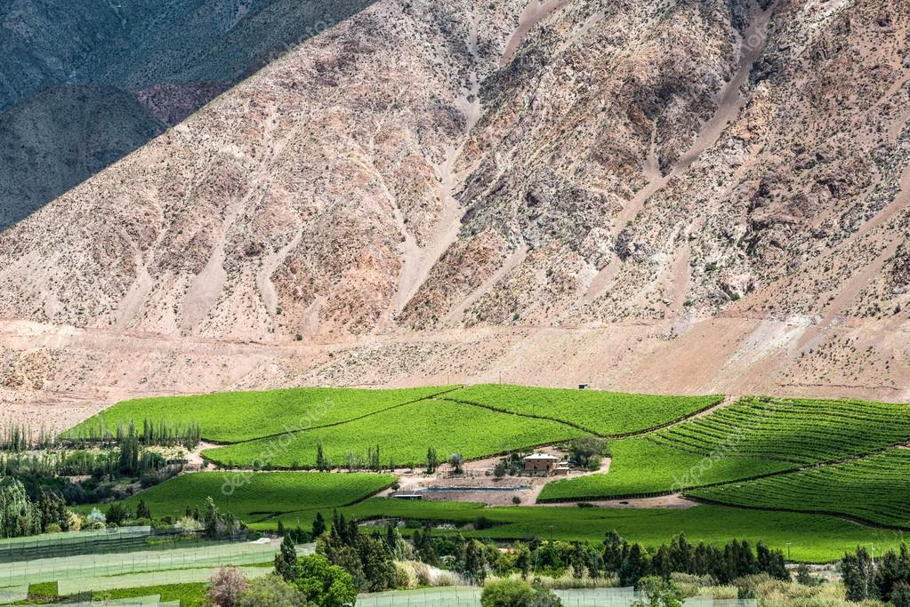 Vineyards of Elqui Valley, Andes part of Atacama Desert in the C