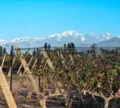 Fotografie Vineyard in Maipu, Argentine province of Mendoza