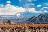 Volcano Aconcagua and Vineyard