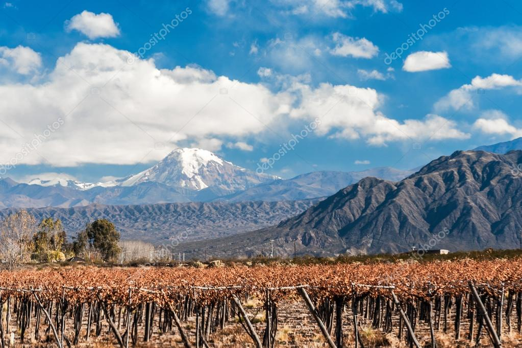 Volcano Aconcagua and Vineyard