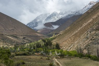 Vineyards of the Elqui Valley, Andes,  Coquimbo region, Chile