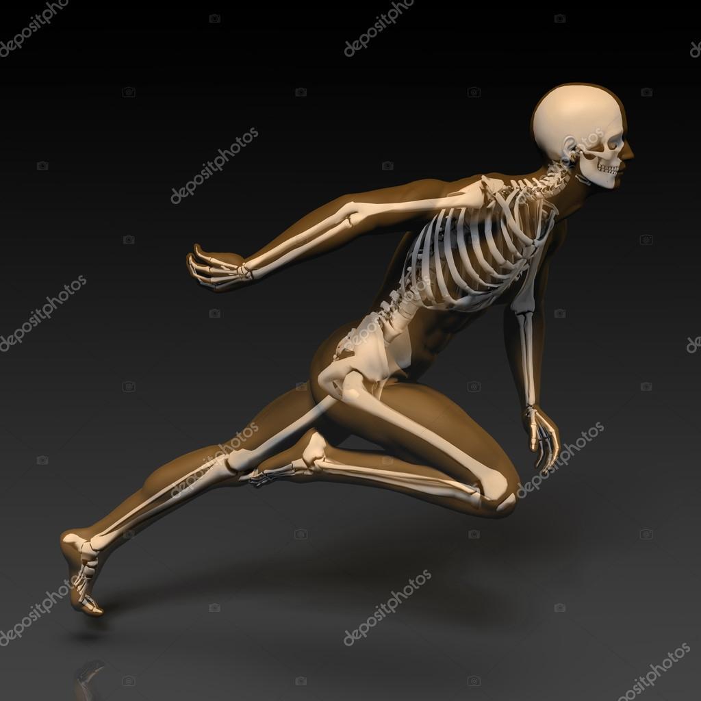 Menschlichen Körper und Skelett Anatomie — Stockfoto © kentoh #112238176