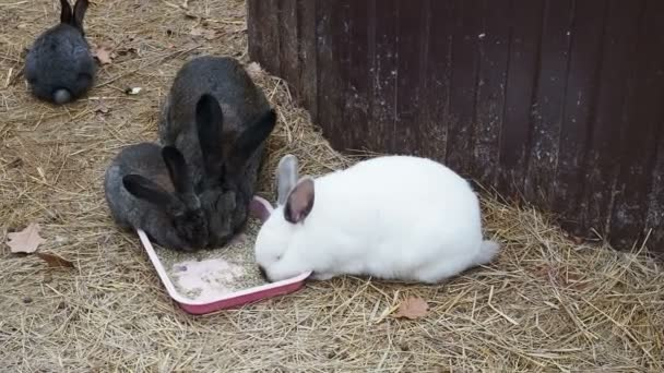 family of rabbits have food on the farm