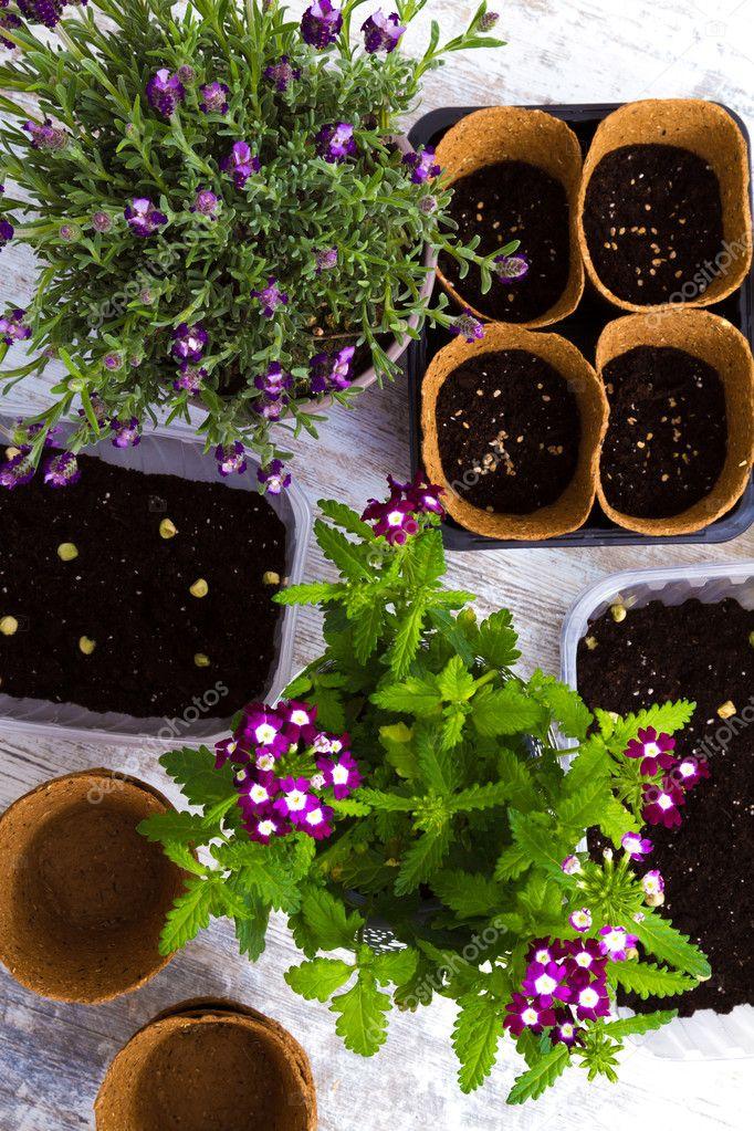 Plantar flores en casa — Foto de stock © konejota #87017072