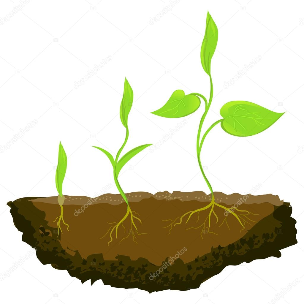 three plants growing in the ground