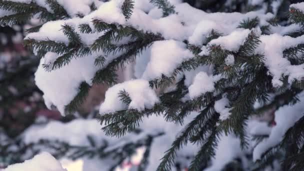 smrkové větve pokryté silnou vrstvou sněhu. Sněhem pokrytý vánoční stromek. Báječný les, stromy v zimním parku.