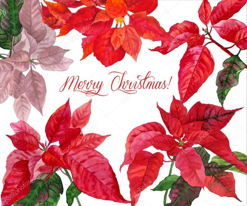 Weihnachten Hintergrund mit Weihnachtsstern. Abbildung — Stockfoto ...