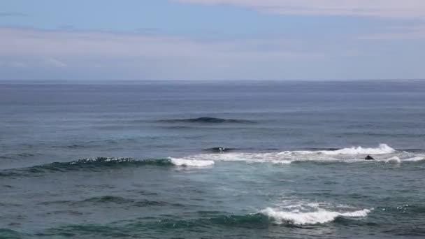 A Kauai coast bálnák