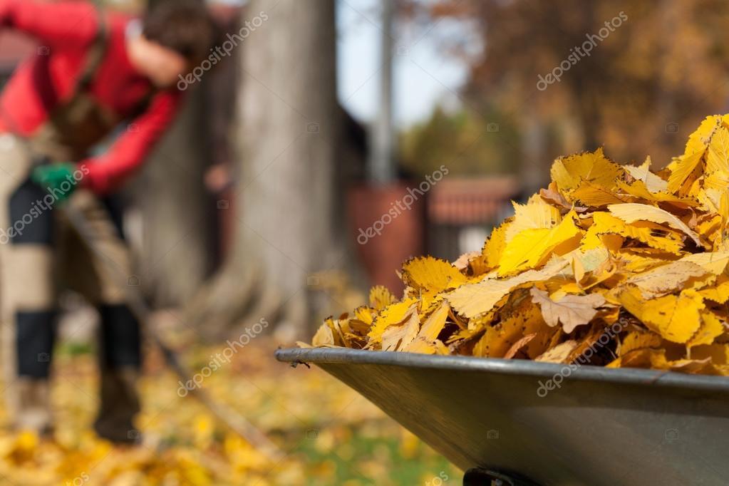 Leaves in a garden