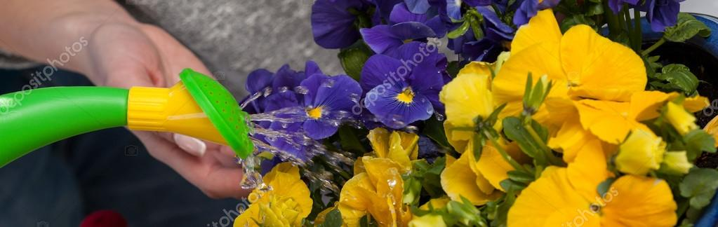 Pouring water on flowers