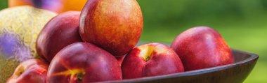 Fresh organic nectarines