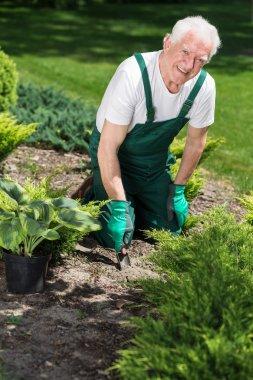 elderly man plants flowers