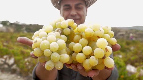 Senior farmář v pleteném klobouku drží bílé čerstvé hrozny v rukou a usmívá se. Hrozny na vinici ve Španělsku. Ekologické pěstování vinných hroznů, výroba vína.