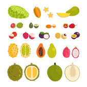 Set of flat cartoon vector illustration tropical exotic fruits