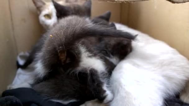 černá kočička porno trubice
