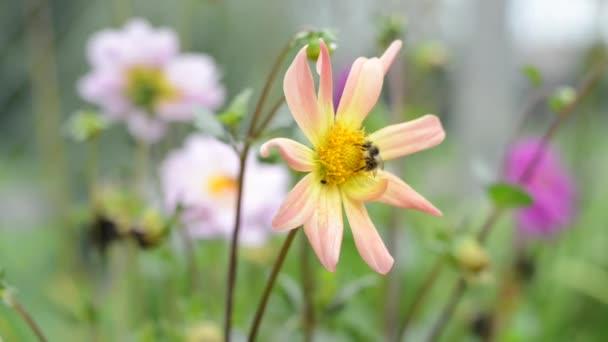 včelka sbírá sladký nektar. Příprava na zimu