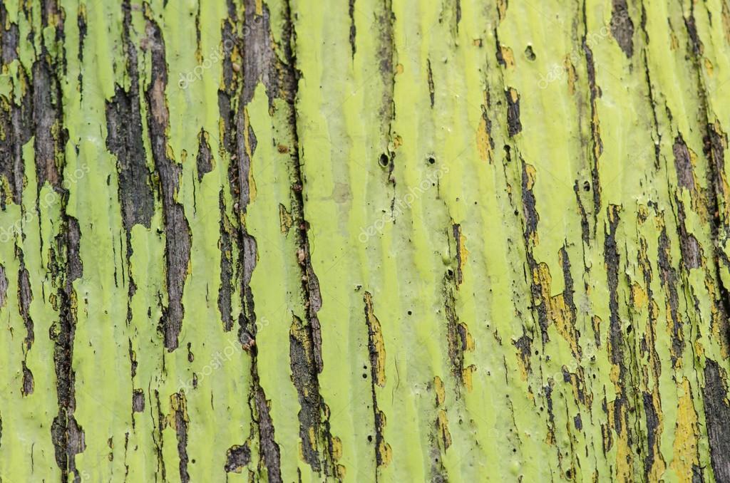 Colori Vernici Legno : Vecchio shabby in legno con cracking colore vernice u foto stock