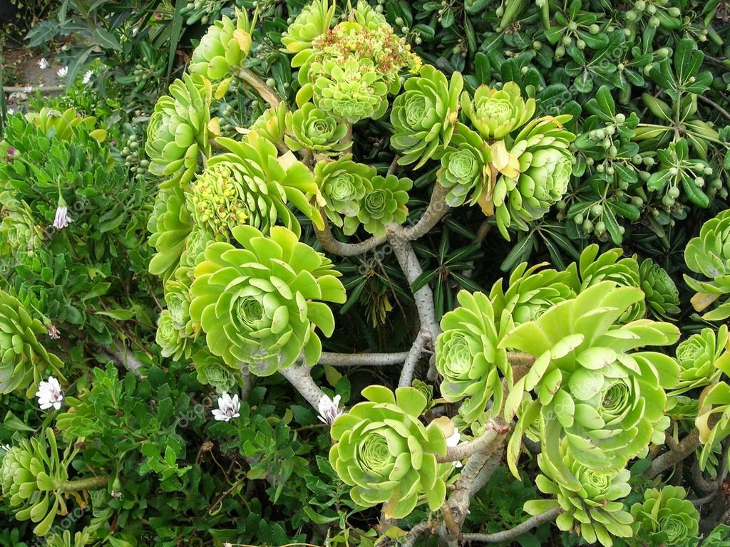 Sträucher anderen subtropischen Pflanzen — Stockfoto