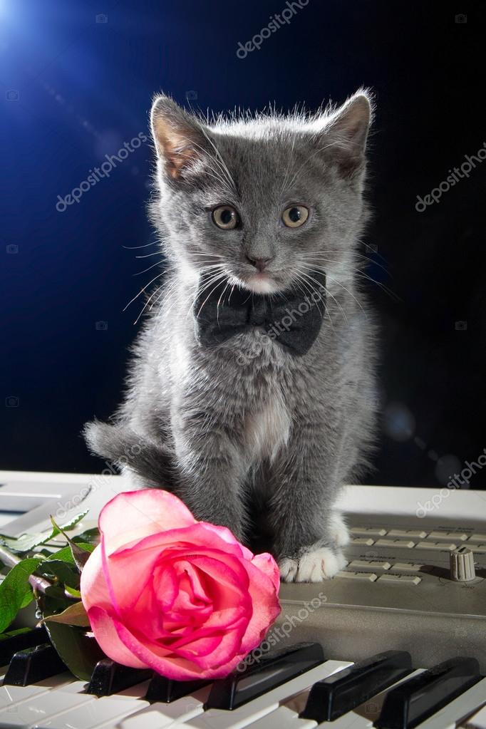 Kitten Sitting On Piano Keys With A Flower On A Black Background
