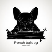 Photo Dog puppy breed French bulldog