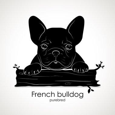 Dog puppy breed French bulldog