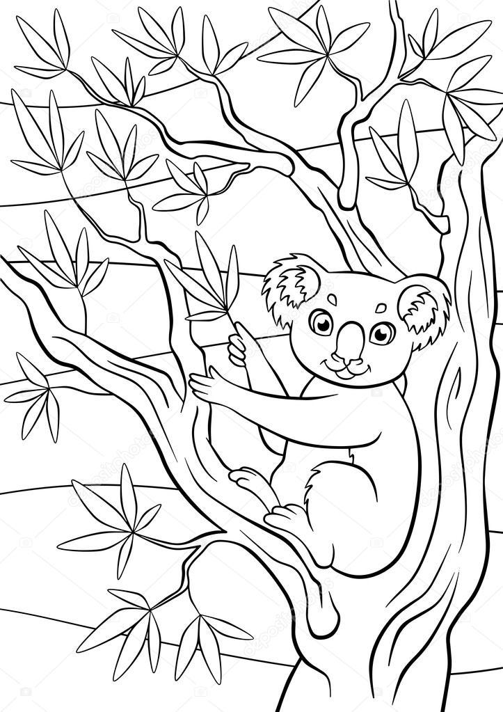 koala sits on the tree and holds eucalyptus