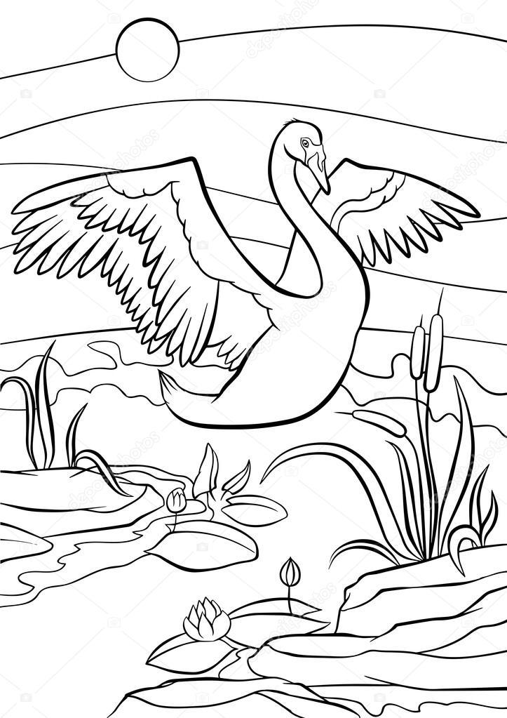Cute beautiful swan with wonderful wings.